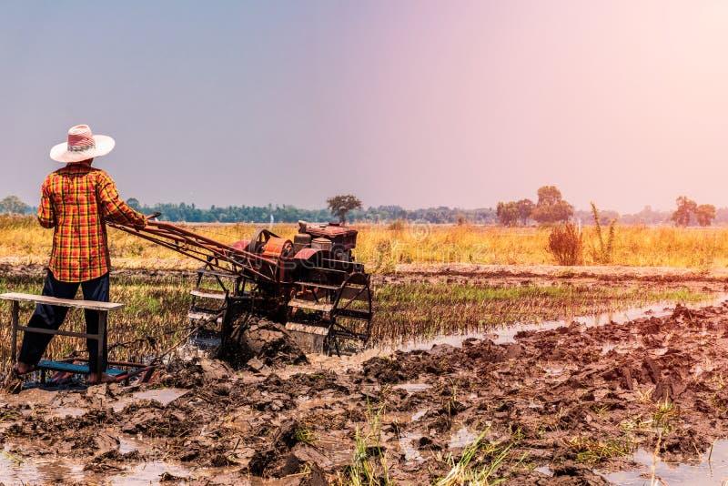 Τομείς ρυζιού που έχουν συγκομιστεί και προετοιμάζονται για την επόμενη φύτευση ρυζιού στοκ εικόνες με δικαίωμα ελεύθερης χρήσης