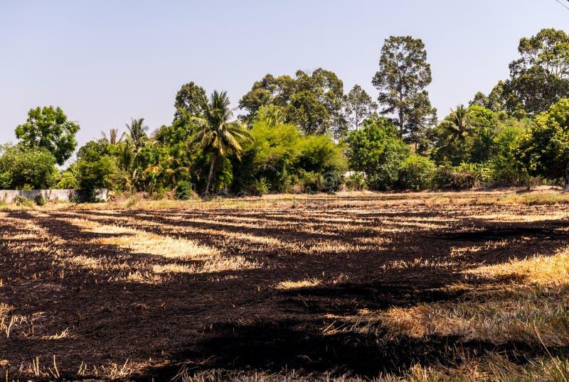 Τομείς ρυζιού που έχουν συγκομιστεί και προετοιμάζονται για την επόμενη φύτευση ρυζιού στοκ φωτογραφία με δικαίωμα ελεύθερης χρήσης