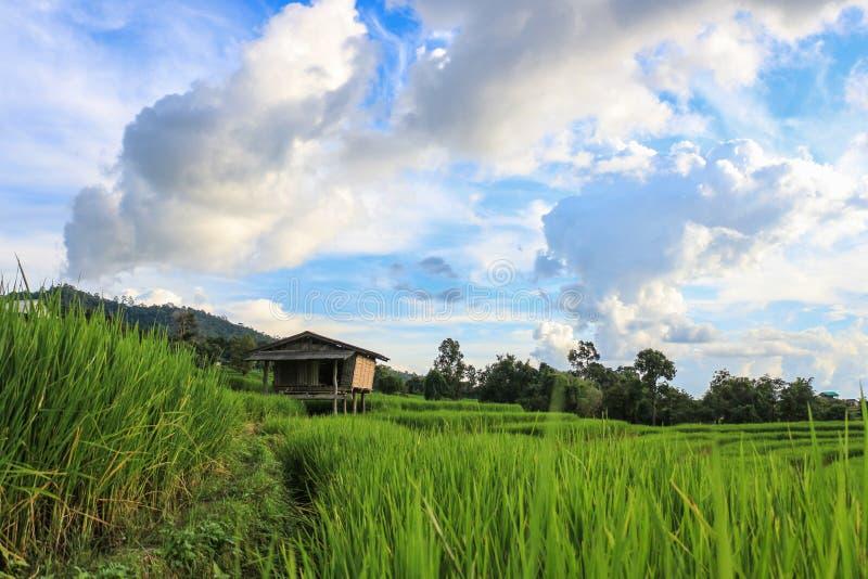 Τομείς ρυζιού στην επαρχία της Ταϊλάνδης στοκ φωτογραφίες