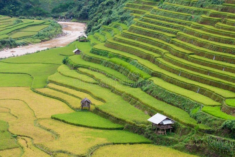 Τομείς ρυζιού στο βορειοδυτικό Βιετνάμ στοκ εικόνες
