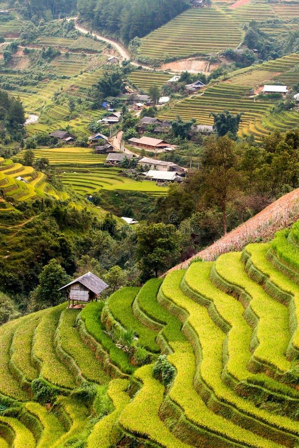 Τομείς ρυζιού στο πεζούλι στη περίοδο βροχών στη MU Cang Chai, γεν Bai, Βιετνάμ Οι τομείς ρυζιού προετοιμάζονται για τη μεταμόσχε στοκ εικόνες