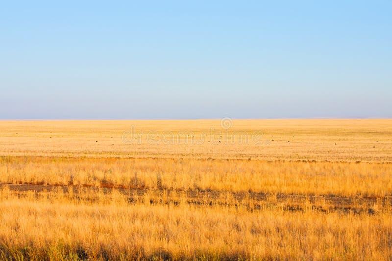 Download Τομείς, στέπα του Καζακστάν Στοκ Εικόνα - εικόνα από καλλιέργεια, breadboard: 22780005