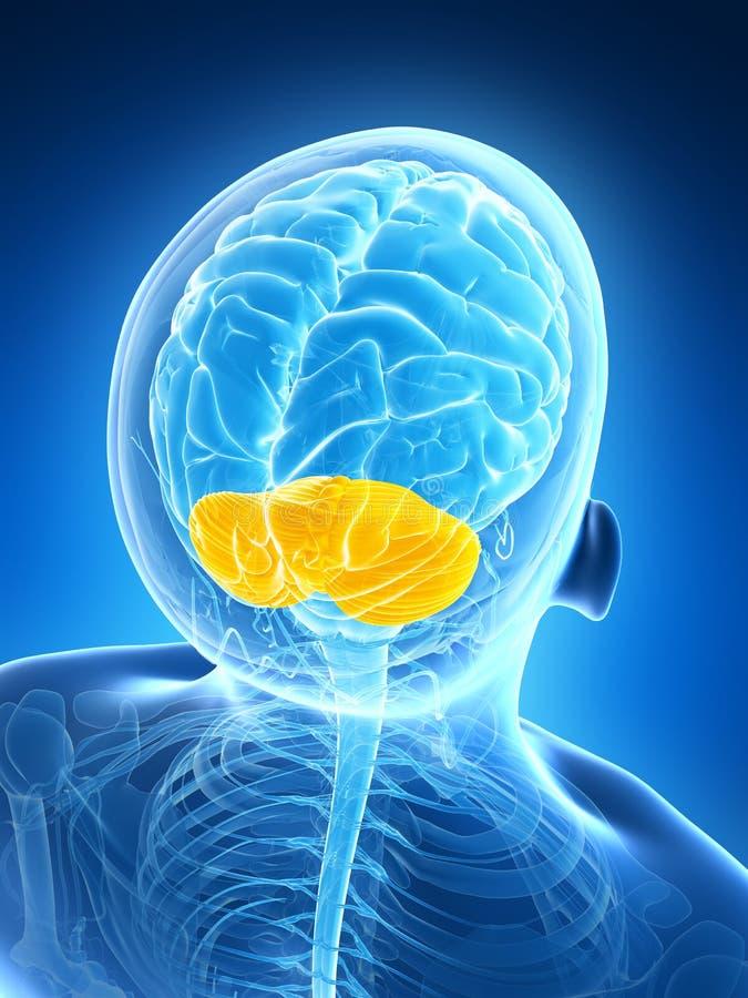 Τονισμένη παρεγκεφαλίδα διανυσματική απεικόνιση