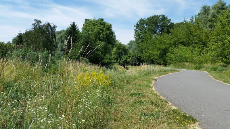 Τοπία Δρόμος και ζωηρόχρωμα άγρια λουλούδια στοκ φωτογραφία με δικαίωμα ελεύθερης χρήσης