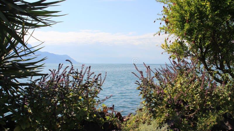 Τοπία λιμνών Genave με τα φύλλα και το ρόδι Plam στοκ φωτογραφία με δικαίωμα ελεύθερης χρήσης