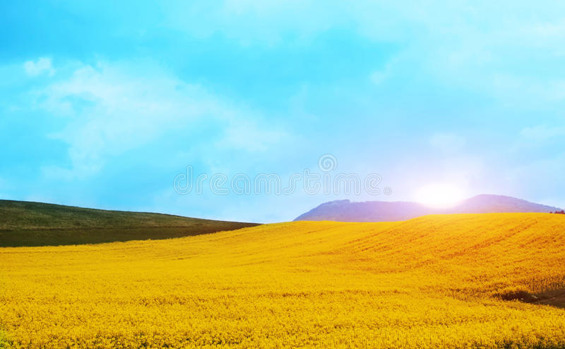 Τοπίο άνοιξη βουνών με τα κίτρινα λουλούδια στοκ εικόνες