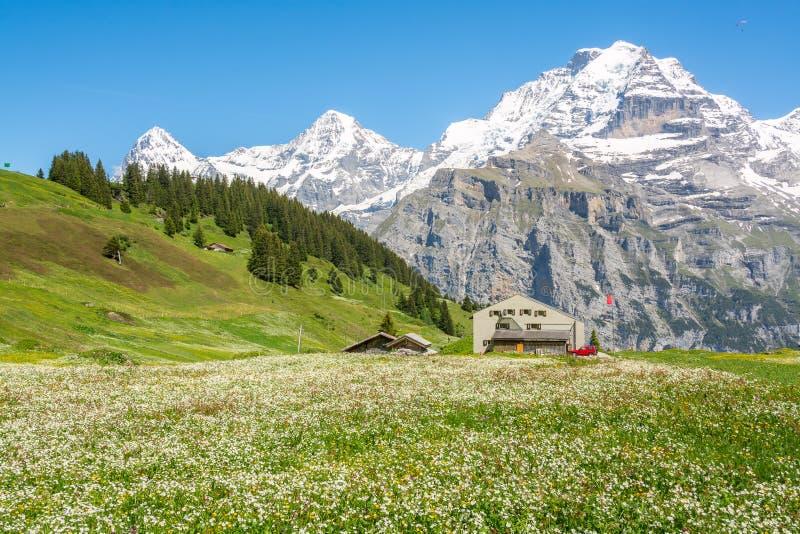 Τοπίο άνοιξη κοντά στη Murren, καντόνιο της Βέρνης, Ελβετία στοκ εικόνες