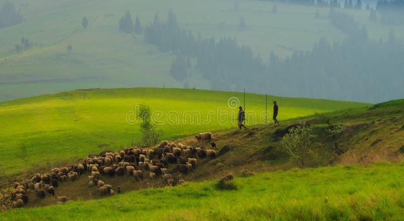 Τοπίο άνοιξη στα Καρπάθια βουνά με  στοκ φωτογραφία