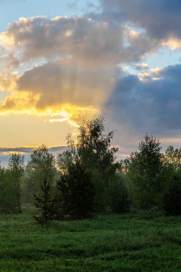Τοπίο άνοιξη στην αυγή στοκ εικόνες