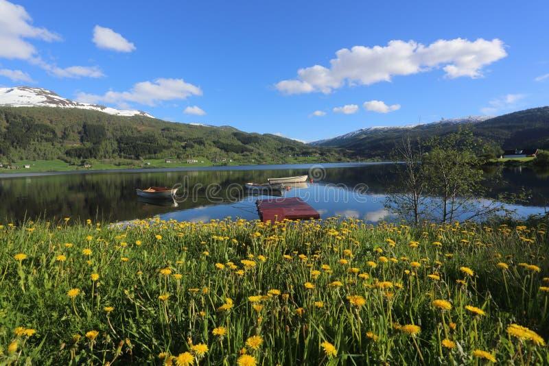 Τοπίο άνοιξη της Νορβηγίας - λίμνη και snowly λουλούδια πνευμάτων βουνών στο πρώτο πλάνο στοκ εικόνες
