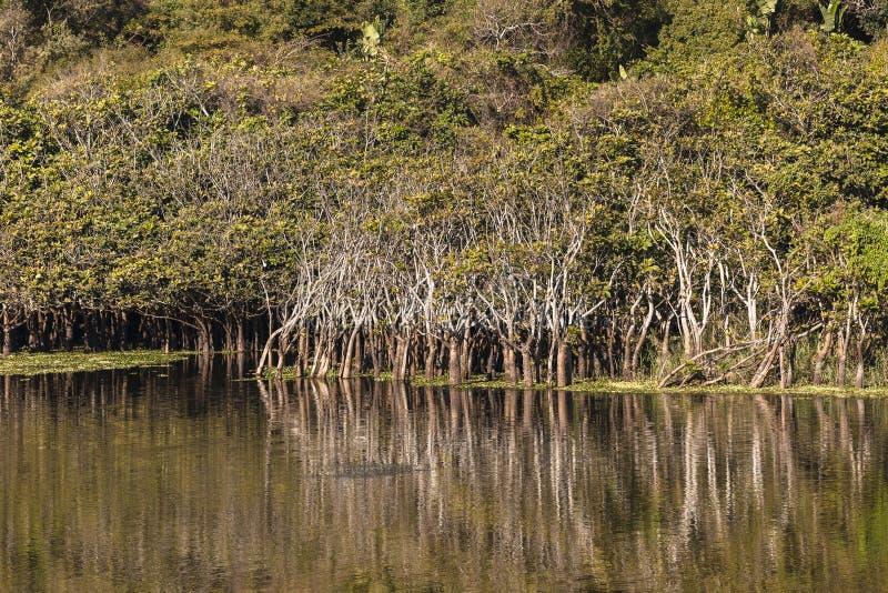 Τοπίο δέντρων λιμνοθαλασσών ποταμών στοκ εικόνα