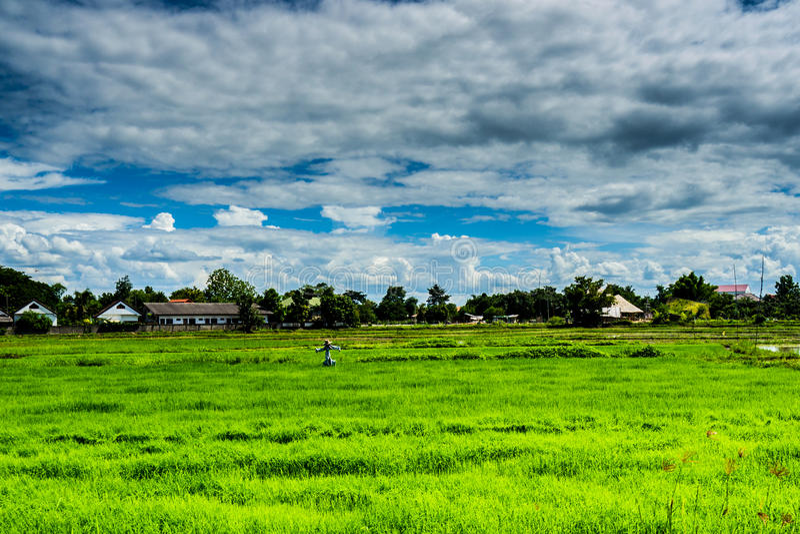 τοπίο αγροτικό Ταϊλάνδη Σκιάχτρο που στέκεται μόνο στοκ εικόνες