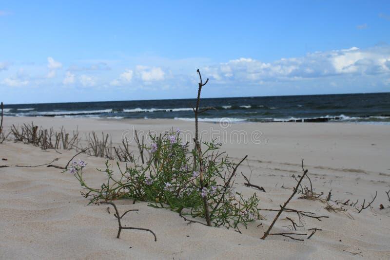 Τοπίο αμμόλοφων της θάλασσας της Βαλτικής, Hel, Πολωνία στοκ εικόνα με δικαίωμα ελεύθερης χρήσης