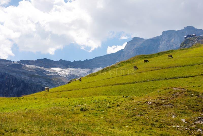 Τοπίο βουνών και παγετώνων στο Tirol Αυστρία, περιοχή Hintertux στοκ εικόνα
