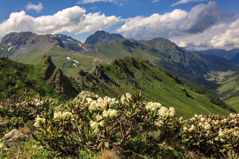 Τοπίο βουνών με rhododendron τα λουλούδια στοκ εικόνες