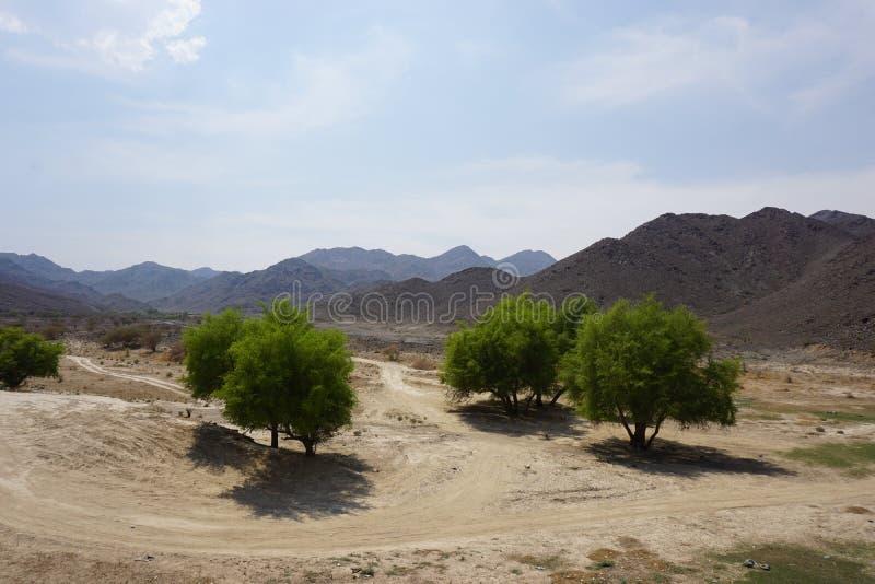 Τοπίο βουνών του Ντουμπάι και πράσινα δέντρα στοκ φωτογραφία