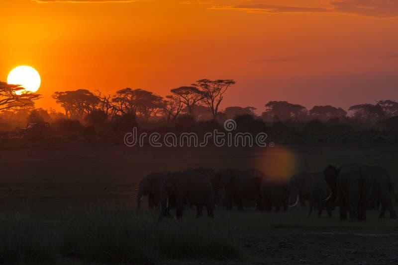 Τοπίο βραδιού με τους ελέφαντες nightlife στοκ εικόνες με δικαίωμα ελεύθερης χρήσης