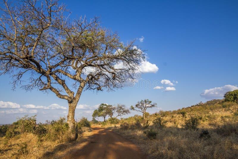 Τοπίο βρώμικων δρόμων σαφάρι στο εθνικό πάρκο Kruger, νότος Afriica στοκ εικόνες με δικαίωμα ελεύθερης χρήσης