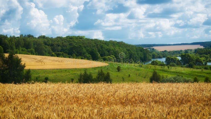 Τοπίο γεωργίας Συγκομιδή σίτου, και νεφελώδης ουρανός στοκ εικόνες