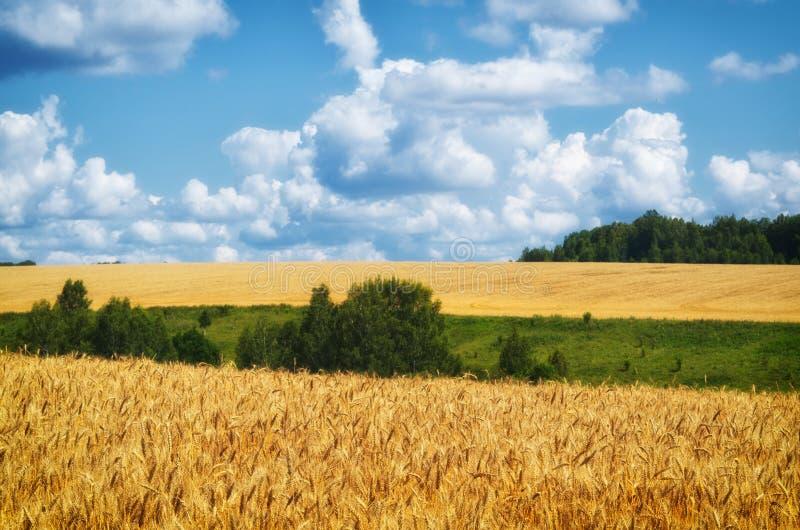 Τοπίο γεωργίας Συγκομιδή σίτου, και νεφελώδης ουρανός στοκ φωτογραφία με δικαίωμα ελεύθερης χρήσης