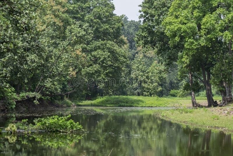 Τοπίο δέντρων ποταμών του εθνικού πάρκου στο κεντρικό ινδικό δάσος στοκ φωτογραφία με δικαίωμα ελεύθερης χρήσης