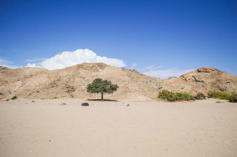 Τοπίο ερήμων και βουνών με το απόμερο δέντρο στη Ναμίμπια στοκ εικόνες
