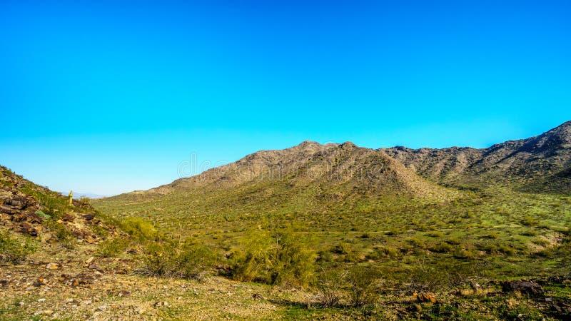 Τοπίο ερήμων με τους κάκτους Saguaro κατά μήκος του εθνικού ίχνους κοντά στο κεφάλι ιχνών του San Juan στα βουνά του πάρκου νότιω στοκ εικόνες