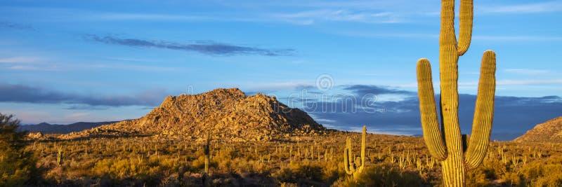 Τοπίο ερήμων της Αριζόνα Lanscape με τον κάκτο Saguaro στοκ εικόνα
