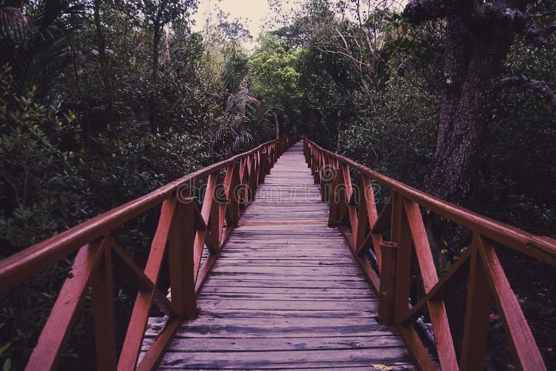 Τοπίο ζουγκλών στο εκλεκτής ποιότητας ύφος γέφυρα ξύλινη στοκ φωτογραφία με δικαίωμα ελεύθερης χρήσης