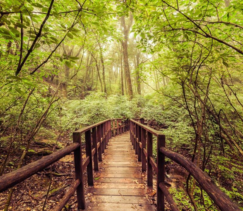 Τοπίο ζουγκλών στο εκλεκτής ποιότητας ύφος Ξύλινη γέφυρα στο τροπικό rai στοκ φωτογραφίες με δικαίωμα ελεύθερης χρήσης