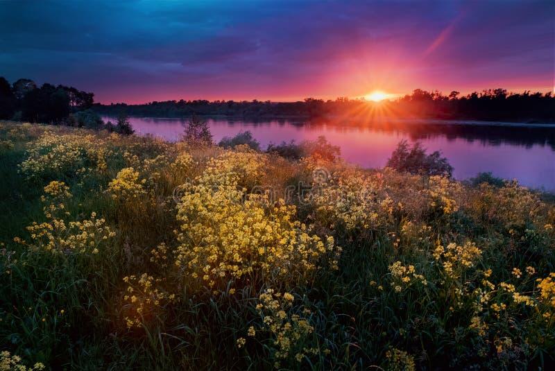 Τοπίο θερινού ηλιοβασιλέματος με έναν ποταμό και κίτρινα λουλούδια στοκ φωτογραφίες
