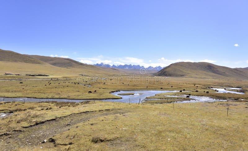 Τοπίο λιβαδιών Guoluo στοκ εικόνες