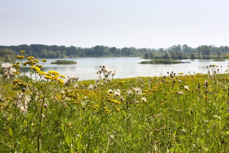 Τοπίο καλοκαιριού - άποψη της κοιλάδας ποταμών του Odra Оder μεταξύ των λιβαδιών και των δασών στοκ φωτογραφία με δικαίωμα ελεύθερης χρήσης