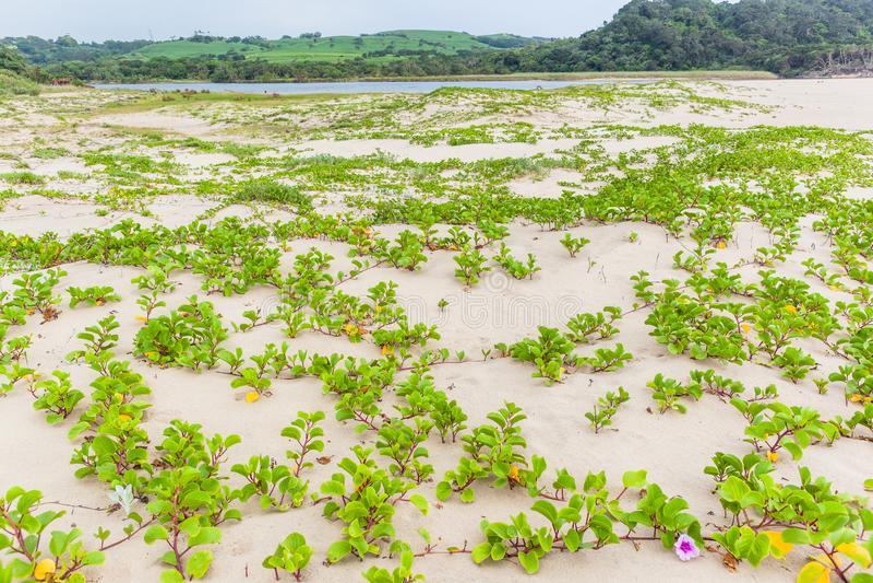 Τοπίο λιμνοθαλασσών ποταμών εγκαταστάσεων αμμόλοφων άμμου παραλιών στοκ εικόνες