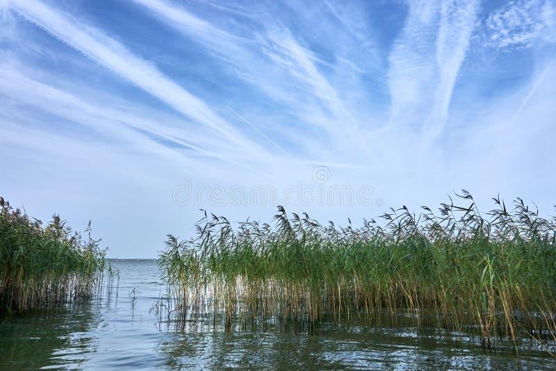 Τοπίο λιμνών με τα αλσύλλια των καλάμων στοκ εικόνες