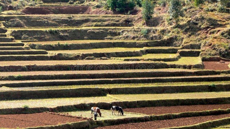 τοπίο Μαδαγασκάρη στοκ φωτογραφία