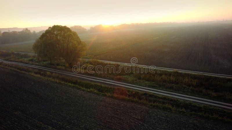 Τοπίο με ένα μόνο δέντρο σε έναν τομέα σίτου κάτω από το ηλιοβασίλεμα στοκ εικόνες