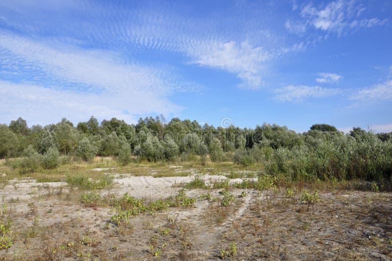 Τοπίο με τα πράσινα δέντρα λευκών και το φωτεινό μπλε ουρανό Ηλιόλουστη θερινή ημέρα και όμορφη θέση για το υπόλοιπο στοκ εικόνες