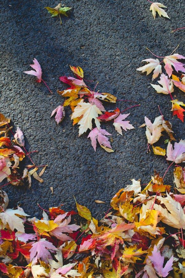 Τοπίο με τα φύλλα φθινοπώρου Αναδρομικό φίλτρο ύφους, φύλλα σφενδάμου στοκ εικόνες