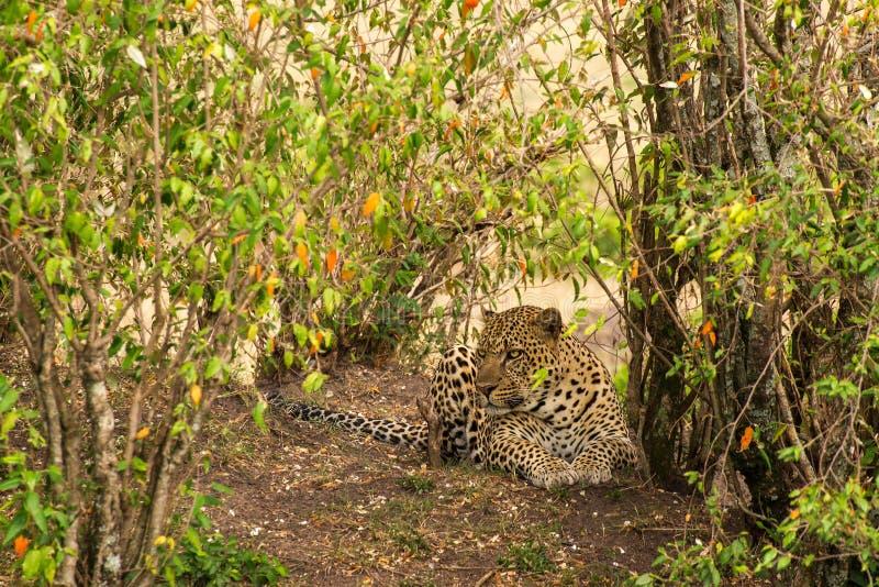 Τοπίο με τη λεοπάρδαλη στοκ φωτογραφίες με δικαίωμα ελεύθερης χρήσης