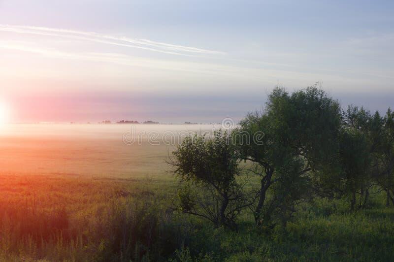 Τοπίο με τη δραματική ομίχλη ουρανού δέντρων στοκ φωτογραφίες