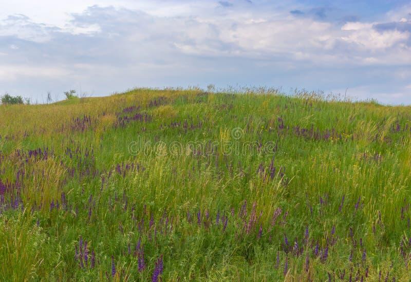 Τοπίο με τις άγρια περιοχές που ανθίζουν τις ετερόκλητες χλόες σε έναν λόφο ενάντια στο νεφελώδη ουρανό στοκ εικόνες