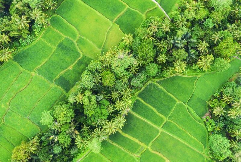 Εναέρια άποψη των πεζουλιών ρυζιού Τοπίο με τον κηφήνα Γεωργικό τοπίο από τον αέρα Πεζούλια ρυζιού το καλοκαίρι Κόσμος της ΟΥΝΕΣΚ στοκ εικόνες