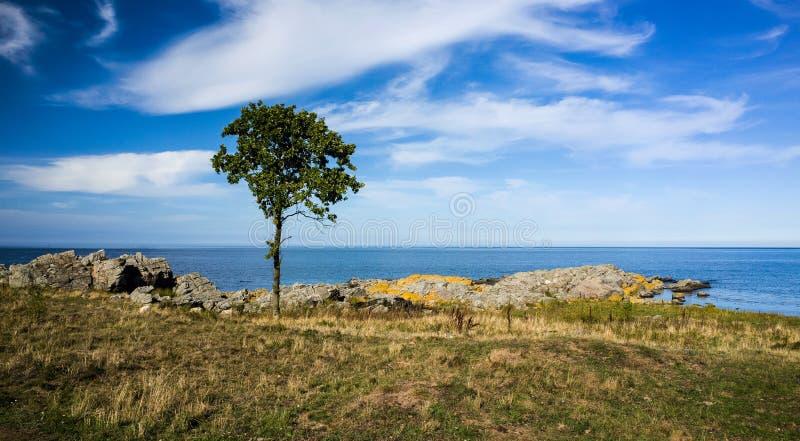 Τοπίο με τους βράχους, το δέντρο και το νερό στοκ εικόνες