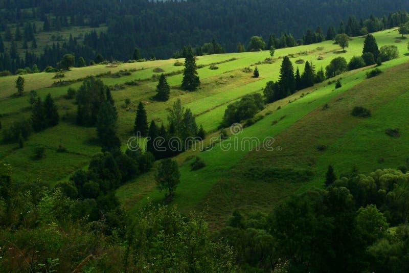 Τοπίο με το δάσος και τομείς στο σλοβάκικο/όριο της Πολωνίας στοκ εικόνες