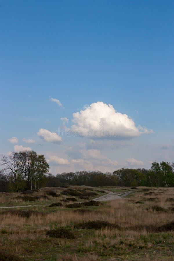 Τοπίο με το ίχνος και ερείκη στην επιφύλαξη φύσης Boberg στο Αμβούργο, Γερμανία στοκ εικόνα