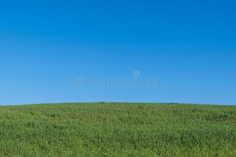 Τοπίο με το πράσινο λιβάδι και το σαφή ελαφρύ ουρανό στοκ εικόνα