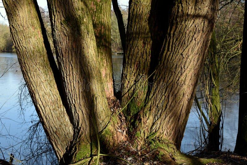 Τοπίο μιας δασικής λίμνης Μεγάλο δέντρο στο μέτωπο στοκ εικόνες με δικαίωμα ελεύθερης χρήσης