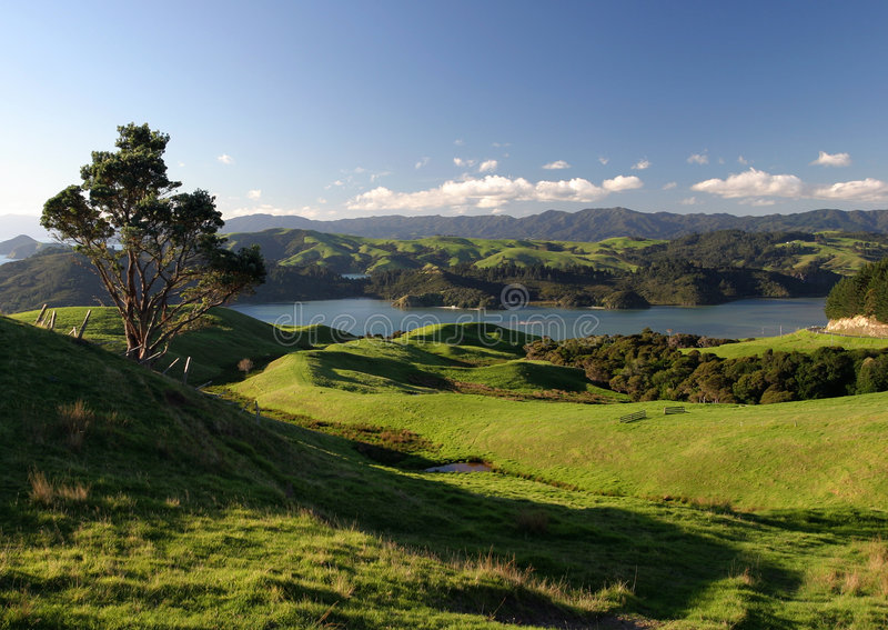 τοπίο νέα αγροτική Ζηλανδία στοκ φωτογραφία με δικαίωμα ελεύθερης χρήσης
