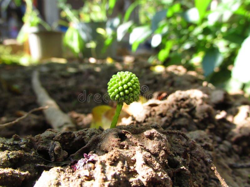 Τοπίο, νέα αρχή, πράσινη ζωή στοκ φωτογραφία